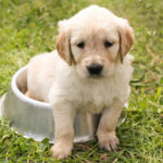 How to Save Money When Buying Pet Food